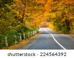 Asphalt Road In Golden Autumn...