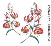 red lily flowers with... | Shutterstock . vector #224598025