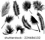 Illustration With Black Fern...