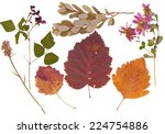 set of wild dry pressed flowers ... | Shutterstock . vector #224754886
