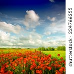 summer wildflowers | Shutterstock . vector #224766355
