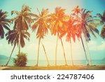 Постер, плакат: Palm trees at tropical