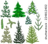 set of fir trees and fir... | Shutterstock .eps vector #224812402