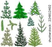 set of fir trees and fir... | Shutterstock .eps vector #224812402
