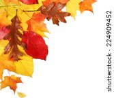autumn leaves isolated on white.... | Shutterstock . vector #224909452