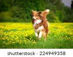 Stock photo running dog 224949358