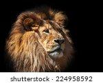 A Moody Lion Portait On Black