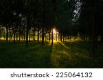 Dark Green Forest With Long...