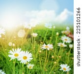 green nature background. daisy... | Shutterstock . vector #225101266