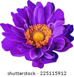 purple mona lisa flower  spring ... | Shutterstock .eps vector #225115912