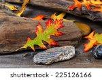 Single Wet Bright Autumn Oak...