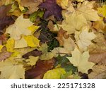 bright autumn leaves background | Shutterstock . vector #225171328