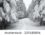 Winter Landscape. The Trail In...
