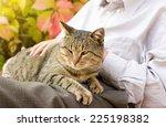 Tabby Cat Enjoying Cuddling In...