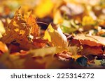 yellow leaves in the park | Shutterstock . vector #225314272