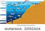 Layers Of The Ocean  Deep Sea...