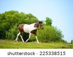 funny horse | Shutterstock . vector #225338515