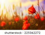 red flowers on green field ... | Shutterstock . vector #225362272