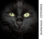 Small photo of A black cat with two yellow eyes and whiskers.