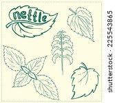 set of green nettle branch and... | Shutterstock .eps vector #225543865