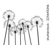 black vector dandelions | Shutterstock .eps vector #225645346