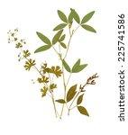 Dry Herbarium Plants. Flowers...