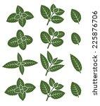 Mint Leaves Set. Vector