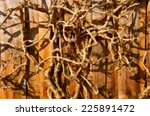 dry tree branches on striped... | Shutterstock . vector #225891472