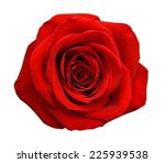 Stock photo red rose isolated on white background 225939538