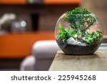 green plant on wooden table.... | Shutterstock . vector #225945268