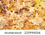 Background group of orange autumn maple leaves. Outdoor  - stock photo