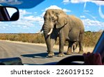 african elephant in the kruger... | Shutterstock . vector #226019152