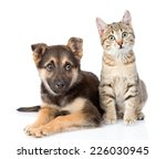 Stock photo dog and kitten looking at camera isolated on white background 226030945