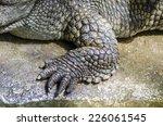Crocodile Legs Are Strong And...