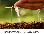 male hand watering young tree... | Shutterstock . vector #226079392