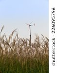 Small photo of Autumn dry grass and aerogenerator