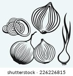 red onion bulb and rings. fresh ... | Shutterstock .eps vector #226226815