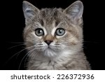 close up british kitty isolated ... | Shutterstock . vector #226372936