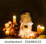 Cat In Witch Costume On...