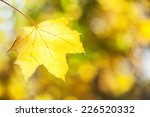 Yellow Maple Leaf On  Autumn...