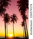 Tree Silhouettes Palm Paradise