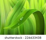 A Drop Of Water On A Stalk Of...