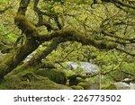 Moss Covered Granite Boulders   ...