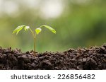 close up young plant growing... | Shutterstock . vector #226856482
