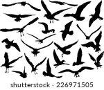 Illustration With Gulls...