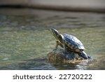 Turtle Sunbathing On Rock In...