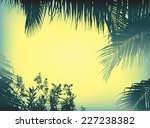 Silhouette Palm Plant With...
