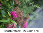 nice violet flowers with green... | Shutterstock . vector #227304478