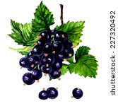 branch of black currant on a... | Shutterstock . vector #227320492