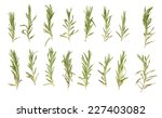rosemary isolated on white... | Shutterstock . vector #227403082